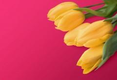 Желтые тюльпаны 4K обои