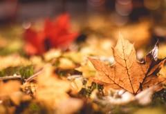 Макро обои осенней листвы