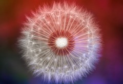 dandelion, macro, одуванчик, макро фото, 4K обои, 3840x2160