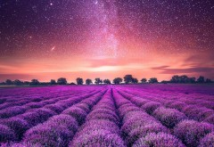 starry_sky_lavender_field-1920x1080