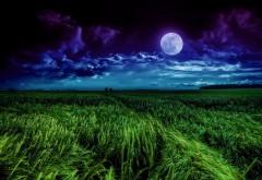 Красивые обои полной Луны на фоне пшеничного поля