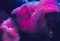 Цветные коралловые рифы обои
