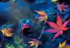 Кленовые листья, осень, листва, фото