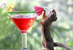 Прикольная белка пьет коктейль с трубочки с зонтиком