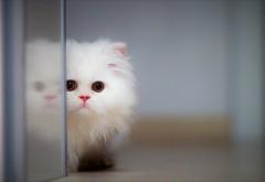 обои 4K милый кот у двери