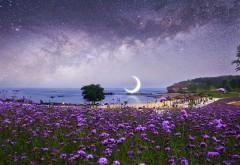 Ночь, пляж, луна, цветы, море, природа, картинки