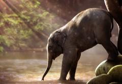 Милый слоненок пьет водичку обои HD