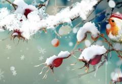 Смешная птичка снегирь в кепочке на ветке