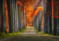 Красная осень обои HD