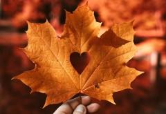 Осенний лист, любовь, сердце обои HD