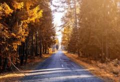 Осенняя дорога в лесу обои HD