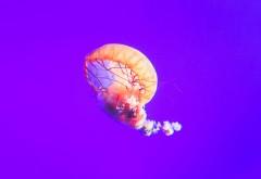 Медуза обои 3840x2160