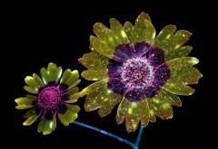 Цифровые цветы скачать обои
