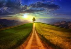 дерево, пейзаж, поляна, проселочная дорога, картинки