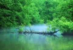 Пруд в лесу картинки