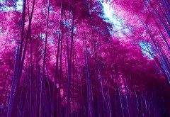 Инфракрасная Арасияма бамбуковая роща лес обои