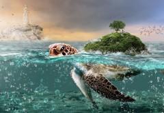 Остров на черепахе