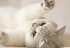Милый котик обои HD