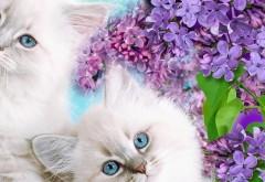 Красивые белые пушистые котята на фоне цветов