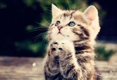 Милый котик просит покушать