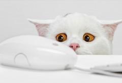 Это мышь? Белый кот боится мыши