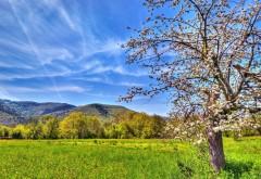 Зеленая трава, горы, голубое небо, цветущее дерево