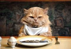 Прикольный пушистый кот за столом кушает как человек