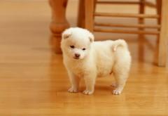 Милая маленькая белая собачка в кухне