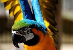 Взлетающий яркий экзотический попугай
