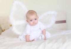Обои маленького ангела с крыльями малыш