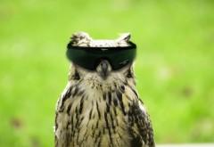 Креативные обои совы в очках