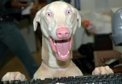 Собака с открытым ртом за компьютером