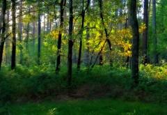 Обои леса, зеленые деревья фото