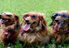 Веселые собачки в солнцезащитных очках