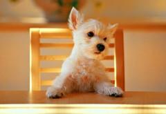 Собака за столом хочет есть, прикольные обои