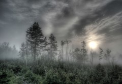 Деревья, лес, небо, туман, тучи, погода