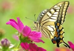 Красивые картинки бабочки скачать бесплатно