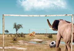 Лев играет в футбол против слоны обои, смешные фото