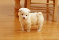Картинки маленькой белой собачки скачать