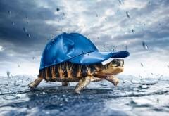 Креативные картинки черепахи в кепке скачать бесплатно