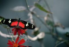 Бабочка на цветке картинки для рабочего стола