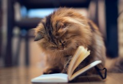 Умный кот читает книгу картинки для рабочего стола