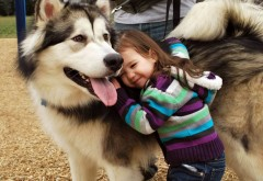 Девочка на игровой площадке с большой собакой обои