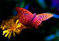Обои бабочки на цветке, макро обои