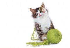 Фоны кота играющегося с клубочком