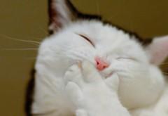 Прикольный кот пытается сдержать свою улыбку обои