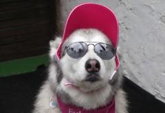 Смешная собака в очках и кепке, картинки юмор