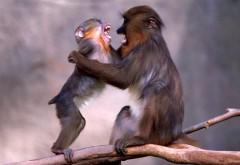 Смешные маленькие обезьянки на ветке дерева обои