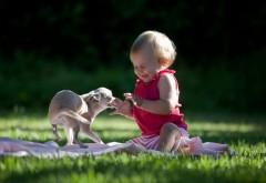Маленький ребенок играет со своей собакой обои
