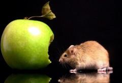 Мышка съела пол яблока прожорливая мышь обои
